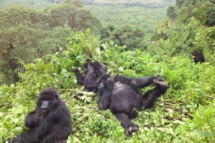 Virunga is saved but Africa's wildlife is being encircled sliver by sliver